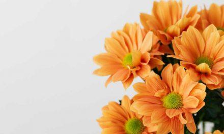 Rangkaian Bunga Ulang Tahun