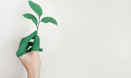 Membuat Kemasan Ramah Lingkungan
