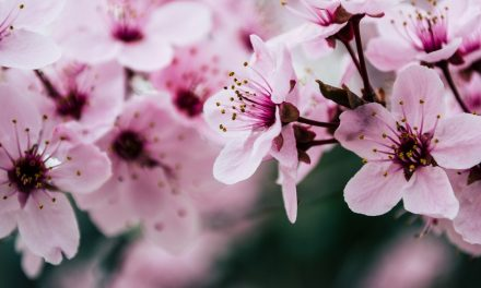 Jenis Bunga Celosia di Indonesia